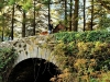 brooklodgehorseridingonbridgesmaller_1329741809
